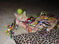 Sam playing with ribbons
